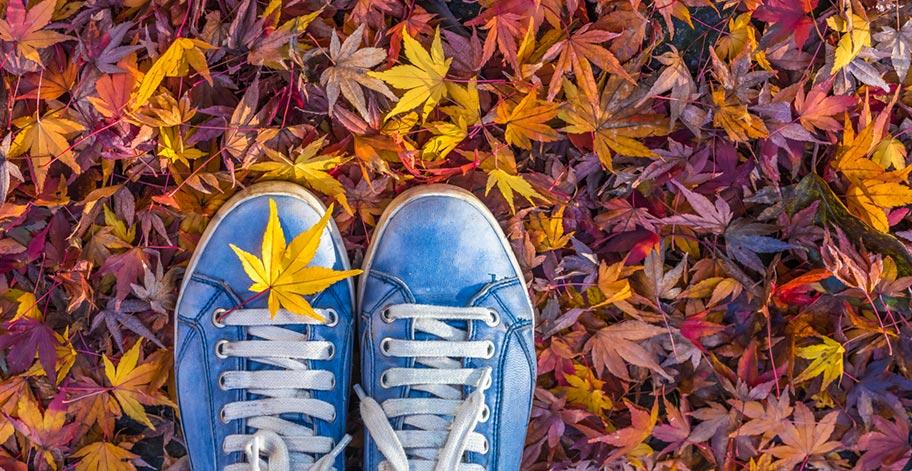 Farben Indian Summer Blätter Ahorn