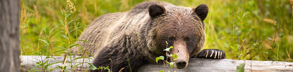 Kanada Wildlife Adventures