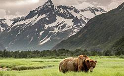 Kanada Tiere Bären Wildnis