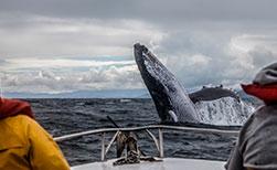 Walbeobachtungen in Kanada