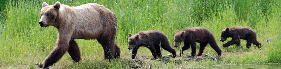 Tierwelt Kanada